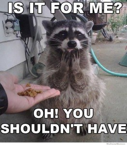 for-me-you-shouldnt-have-racoon