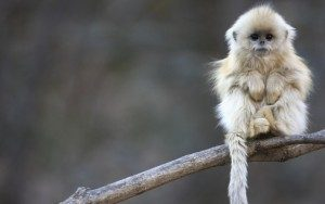 Cute-Monkeys-Wallpaper-7